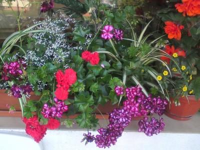 Blumen für sonnige Balkone 2