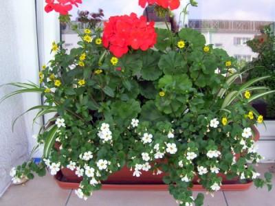 Blumen für sonnige Balkone 3