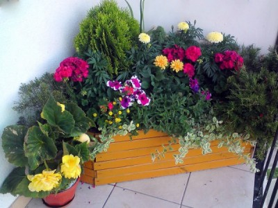 Blumen für sonnige Balkone