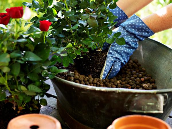 Super Blähton - Eigenschaften und Verwendung im Garten   Gartentipps #HF_85
