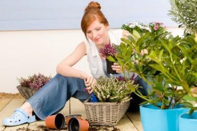 Wenn wir Balkon und Terrasse gestalten, müssen wir Pflanzen an die Platzbedingungen anpassen. Es lohnt sich auch blühende Pflanzen zu unterschiedlichen Zeiten anzupflanzen. Im Herbst verschönern in dieser Zeit blühende Heidekräuter unseren Blumenkasten.