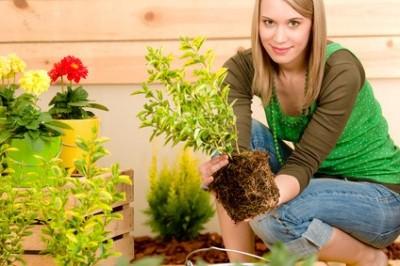 Pflanzen, die in Behältern verkauft werden, können über die gesamte Saison ab Frühling bis Herbst gepflanzt werden. Jede Jahreszeit ist daher gut seinen Balkon oder seine Terrasse zu verschönern.