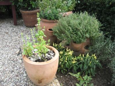 Wenn Sie Ihre Terrasse gestalten, können Sie auch frische Kräuter in Töpfen anbauen.