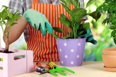Pflanzen umtopfen
