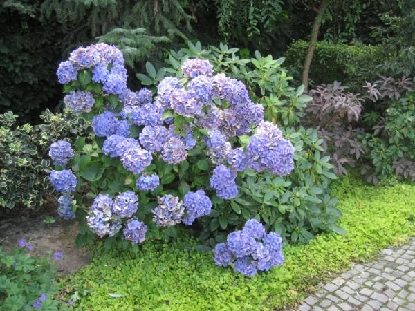 Pflanzen Fur Schattige Platze Gartentipps