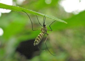 Mittel gegen Mücken