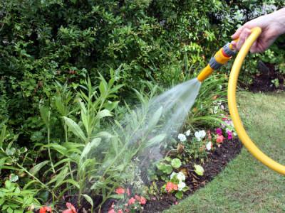 Pflanzen im Garten richtig gießen