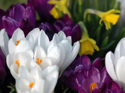 Blumenzwiebeln im Topf überwintern
