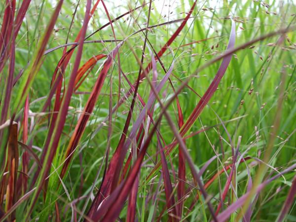 garten gräser schneiden
