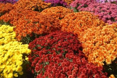 Herbstpflanzen für den Garten