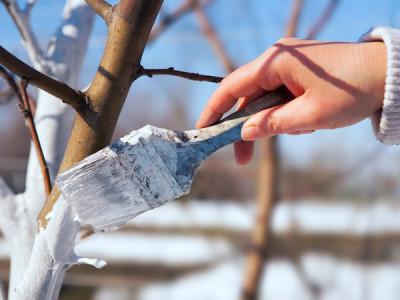 Winterschutz für Obstbäume