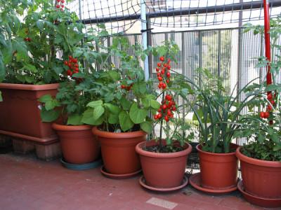 Gemüse im Kübel