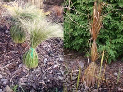 Gräser überwintern