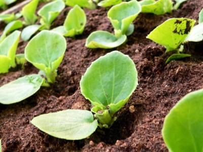 Anzuchterde für Samen