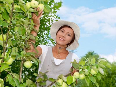 Apfelbaum schneiden