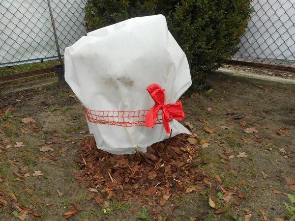 Prächtig Hortensien überwintern | Gartentipps #AK_29