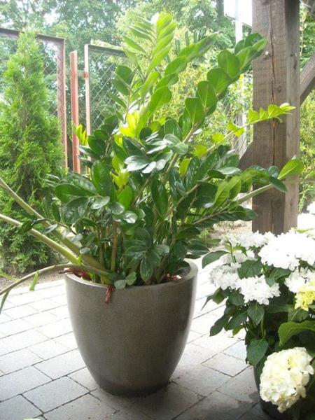 Pflanzen Furs Buro Gartentipps