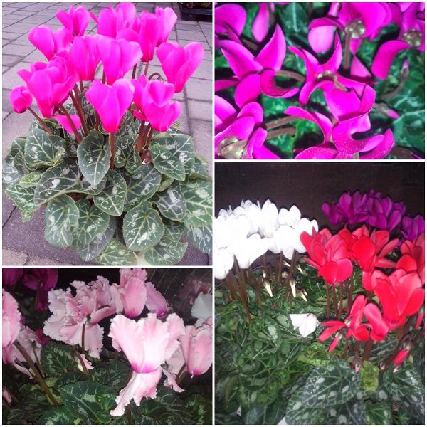 7 Beste Winterbluhende Zimmerpflanzen Gartentipps