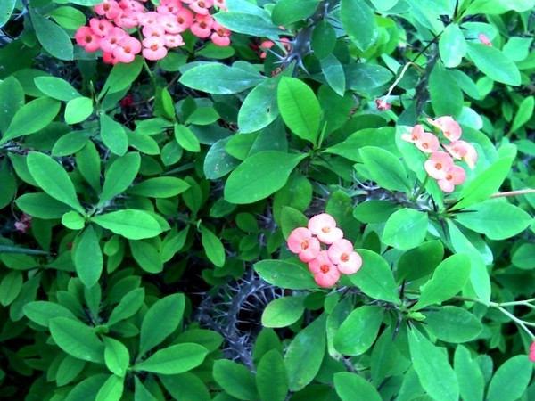 Lang Bluhende Zimmerpflanzen 7 Schonsten Blumen Gartentipps
