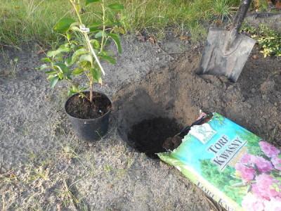 Heidelbeeren anpflanzen bild