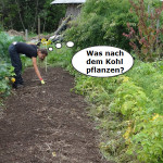 Fruchtfolge im Gemüsegarten-1