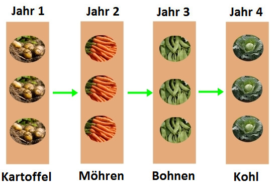 Beliebt Fruchtfolge im Gemüsegarten | Gartentipps SJ82