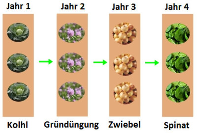 Fruchtfolge im Gemüsegarten