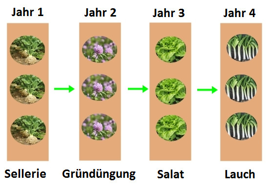 Super Fruchtfolge im Gemüsegarten | Gartentipps CG29