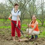 Obstbäume und Obststräucher pflanzen