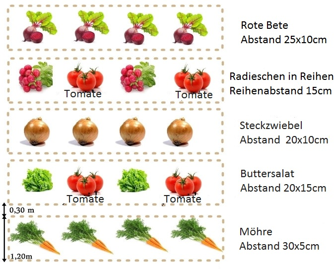 Gemusegarten anlegen fur anfanger  Gemüsegarten für Anfänger | Gartentipps