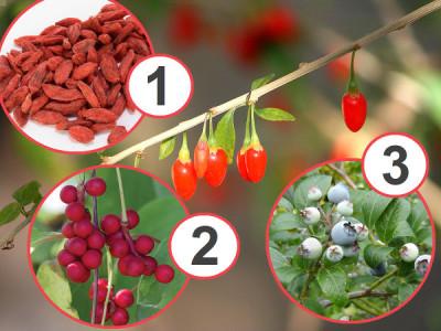 3 gesündesten Früchte der Welt, die Sie im Garten haben müssen