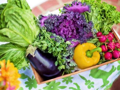 3 natürliche Dünger für Gemüse