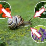 Pflanzen gegen Schnecken