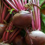 Rote Bete - Wirkung, Anbau und Sorten