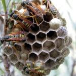 Mittel gegen Wespen und Hornissen