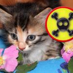 giftige Pflanzen für Katzen