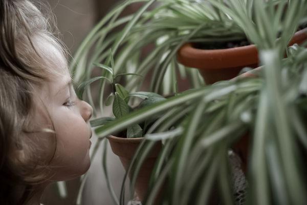 Pflanzen im Kinderzimmer – Grünlilie