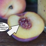 wie-kann-man-pfirsichbaum-aus-kern-ziehen (1)