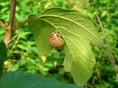 Schnecken im Garten - was hilft gegen Schnecken
