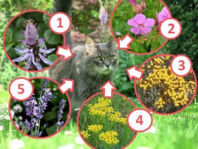 Pflanzen gegen Katzen im Garten
