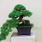 Bonsai Baum - Pflege zu Hause