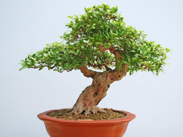 Bonsai Baum Pflege Zu Hause Gartentipps