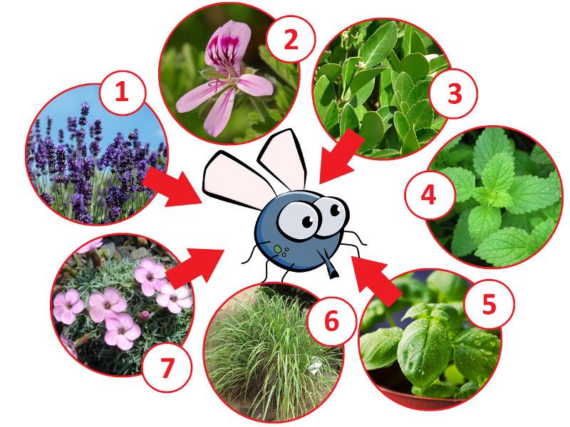 Pflanzen gegen Fliegen
