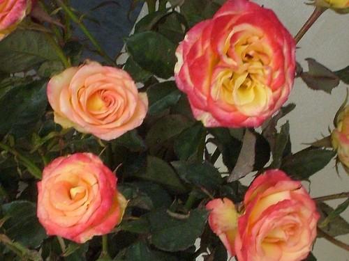boden rosen schneiden